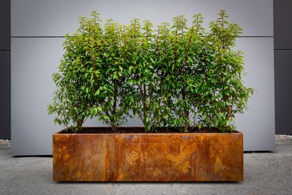 Pflanzgefäß in edlem Rostlook | Pflanztrog | Blumenbeet | Natur im Garten